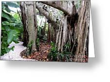 Under The Banyan Tree Greeting Card