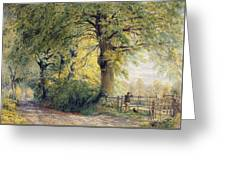 Under The Beeches Greeting Card by John Steeple