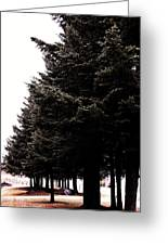 Under The Blue Spruce Greeting Card