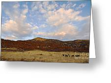 Under The Colorado Sky Greeting Card