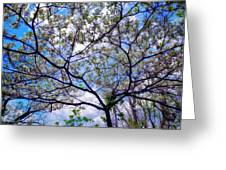 Under The Dogwood Greeting Card