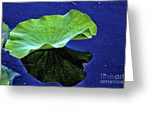 Under The Lily Pad Greeting Card