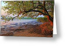Under The Mangroves Greeting Card