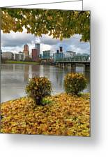Under The Maple Tree In Portland Oregon During Fall Greeting Card