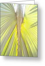Under The Palm I Gp Greeting Card