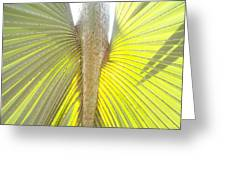 Under The Palm II Gp Greeting Card