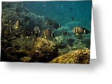 Under The Sea Scape Greeting Card