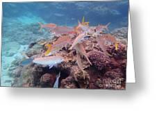 Under Water Fiji Greeting Card