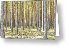 Underbrush. Greeting Card