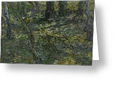 Undergrowth Saint Remy De Provence  July 1889 Vincent Van Gogh 1853  1890 Greeting Card