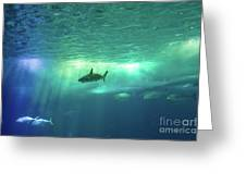 Undersea Scene Background Greeting Card