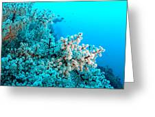 Underwater Cherry Blossom Greeting Card