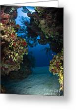 Underwater Crevice Through A Coral Greeting Card