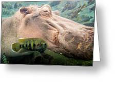 Underwater Hippo Greeting Card
