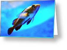 Underwater Levity Greeting Card