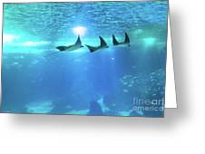 Underwater Manta Background Greeting Card