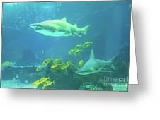 Underwater Shark Background Greeting Card