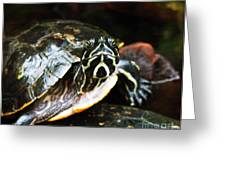 Underwater Turtle Greeting Card