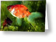 Underwater World Greeting Card