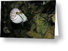 Underwater01 Greeting Card