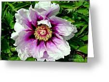 Unfolding Beauty Greeting Card