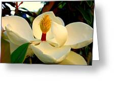 Unfolding Beauty Greeting Card