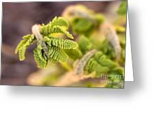 Unfolding Fern Leaf Greeting Card