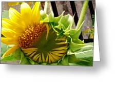 Unfolding Sunflower Greeting Card