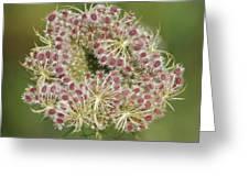 Unfurling Nature Macro Square Greeting Card