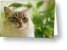 Unimpressed Greeting Card
