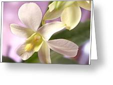 Unique White Orchid Greeting Card by Mike McGlothlen