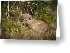 Unita Ground Squirrel Greeting Card