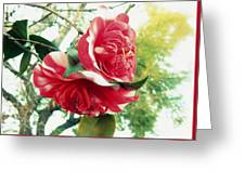 United With The Vine Greeting Card