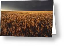 United States, Kansas, Summer Thunder Greeting Card