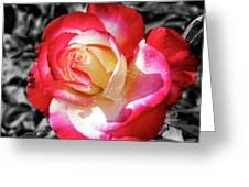 Unity Rose Greeting Card
