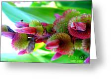 Unknown Flower Seeds Greeting Card