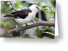 Unknown White Bird On Tree Branch Greeting Card