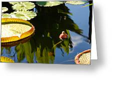 Unopened Water Lily And Reflections Greeting Card