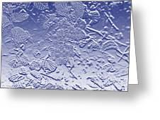 Unripe Blackberries In Blue  Greeting Card