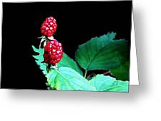 Unripe Blackberries Greeting Card