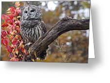 Untitled Owl Greeting Card