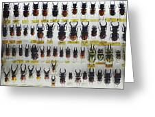 Unusual Pattern Made Out Of Many Stag Beetles Of Different Sizes Greeting Card