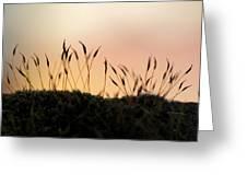Unusual Sunset Greeting Card