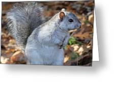 Unusual White And Gray Squirrel Greeting Card