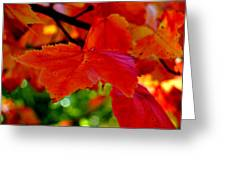 Up Close And Colorful Greeting Card