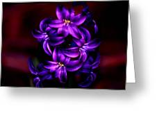 Up Close And Purple Greeting Card
