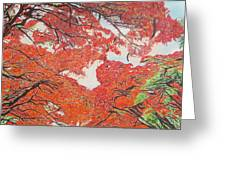 Up Close Flamboyant Greeting Card