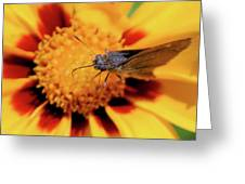Up Close Greeting Card