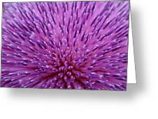 Up Close On Musk Thistle Bloom Greeting Card