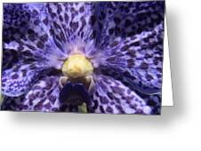 Up Close Orchid Greeting Card